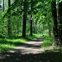 С камерой по лесу :: Милешкин Владимир Алексеевич