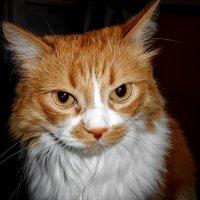 Серьёзный кот :: Владимир Савельев