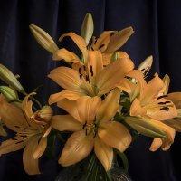 Lilies :: Michael & Lydia Militinsky