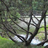 В японском саду :: Маера Урусова