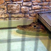 рояль в кустах или крокодил под лавкой :: Александр Корчемный