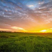 Картинка летняя, вечерняя... :: Александр Никитинский