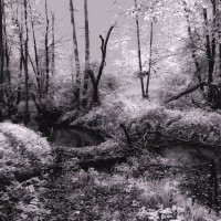 ...forest :: Александр Липецкий