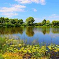 И вновь июнь сменяется июлем... :: Лесо-Вед (Баранов)