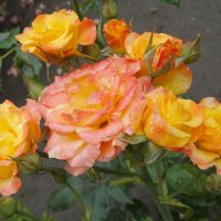 Под дождём в июле... :: Тамара (st.tamara)