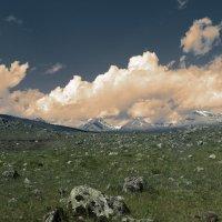 Альпийские луга :: Юлия Зырянова