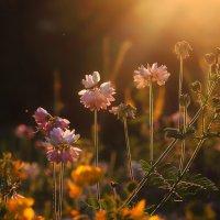 Вечерний запах лета :: Cергей Дмитриев