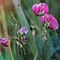 цветы :: Марьям