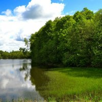 Заростает озеро травой :: Милешкин Владимир Алексеевич