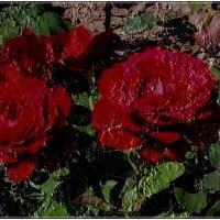 Эти розы - для вас! :: Нина Корешкова