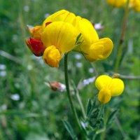 Цветочки полевые :: Liliya Kharlamova