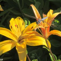 Лето в парке Октября :: Нина Бутко