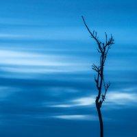 Одиночество :: Иван Кривко