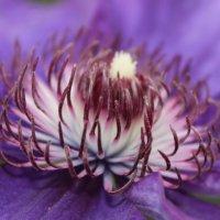 Цветок) :: Колибри М