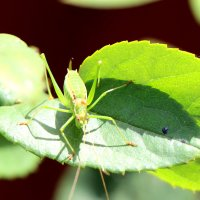 насекомое :: Cветлана Свистунова