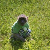 Обезьянка на траве :: Aнна Зарубина