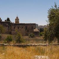 Вид на монастырь Креста в Иерусалиме. :: Alla