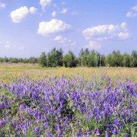 полевые цветы :: татьяна