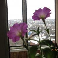 А за окном зима :: татьяна