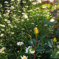 Цветочная поляна :: Yuriy P.