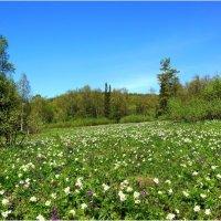 Цветочная поляна :: Lidiy Riga