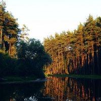 Вечерний лес :: Наталья Ткачёва