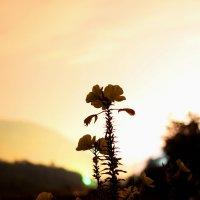 Просто цветок. :: АНДРЕЙ ШЕВЧЕНКО