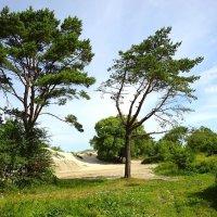 Деревья побережья :: Маргарита Батырева