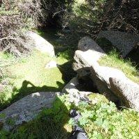Где-то там внизу грибы... :: Андрей Солан