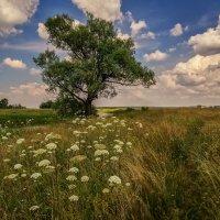 Одинокое дерево :: Андрей Дворников