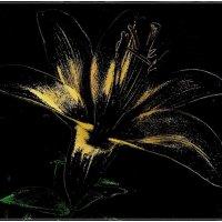 Жёлтое мерцание лилии :: Нина Корешкова