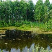 лесное озеро :: Alexandr Staroverov