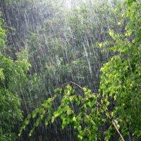 Летний дождь :: Сергей Форос
