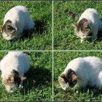 Кошка на выпасе :: Нина Бутко