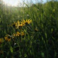 Борьба за место под солнцем. :: Марина Влади-на