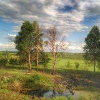 Природа :: Aleksandr Shishin