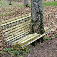 Скамейка в парке. :: Олег Попков
