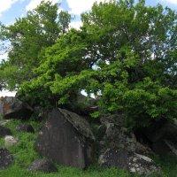 Сад на камнях :: Volodya Grigoryan