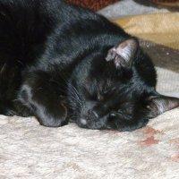 Такой милый, когда спит. :: Ольга Васильева