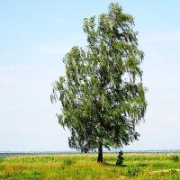 На семи ветрах... :: Маргарита Батырева