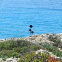 Кипр,Средиземное море :: tgtyjdrf