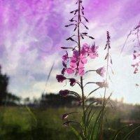 Сиреневом цвете :: Марина Влади-на