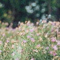 Красота природы :: Вероника