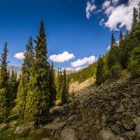 На горных склонах Алматы :: Марат Макс
