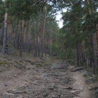 В горах.... велосипедная тропа :: Olga Vunova