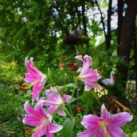 Цветы в зоопарке :: Oksana KU
