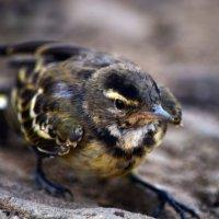 Птичка :: Татьяна Евдокимова