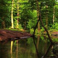 Ручей в парке :: Alexander Andronik