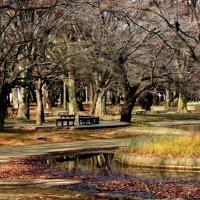 Токийский Парк Йойоги (Yoyogi Park) :: Tatiana Belyatskaya
