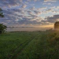В июньский восход на лугах клязьменской поймы. :: Igor Andreev